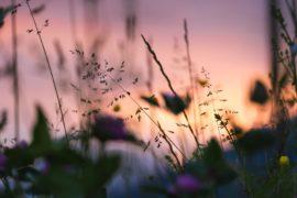 Mannen van woorden en niet van daden zijn als een tuin vol onkruid